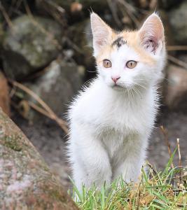 Kattemor på besøg i haven med 5 killinger...